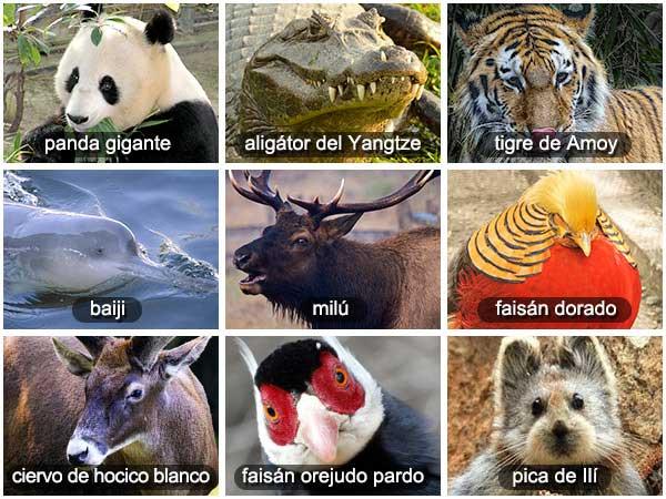 Animales salvajes de China