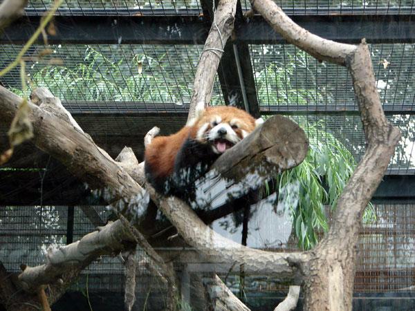 Zoológico de Beijing