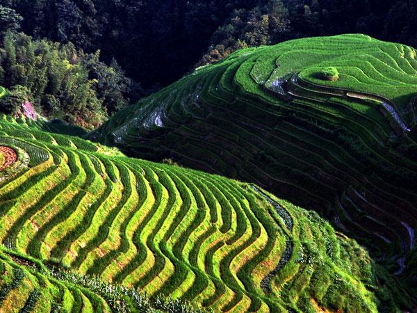 Terrazas de Arroz de Longji
