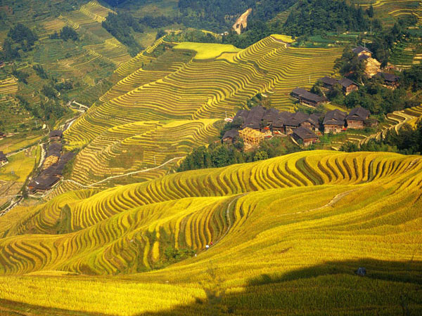 https://www.viajedechina.com/pic/city/guilin/attractions/Longji-Rice-Terrace-16.jpg