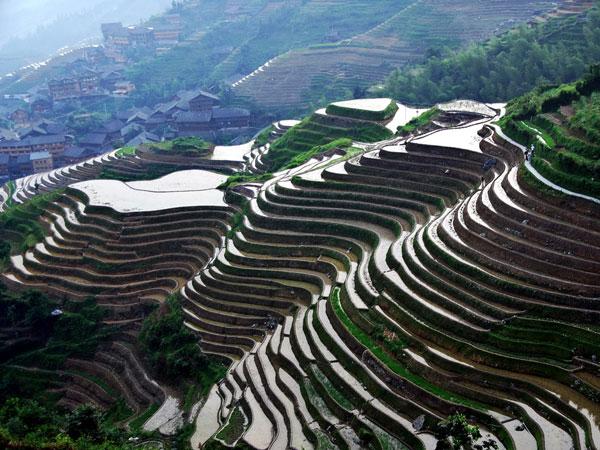 Terrazas de Arroz de Longji en Longsheng