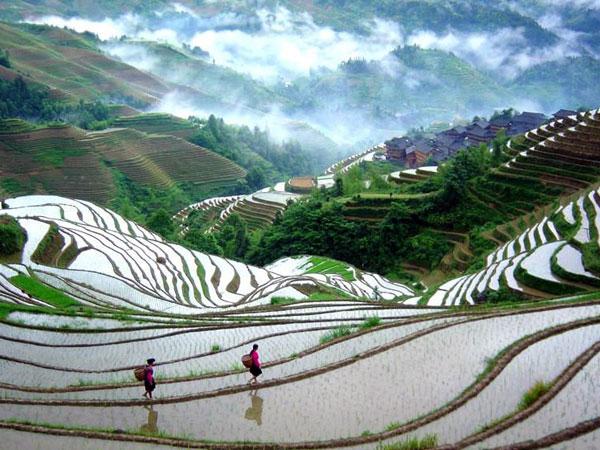Terrazas de Arroz de Longji en Longsheng en Guilin