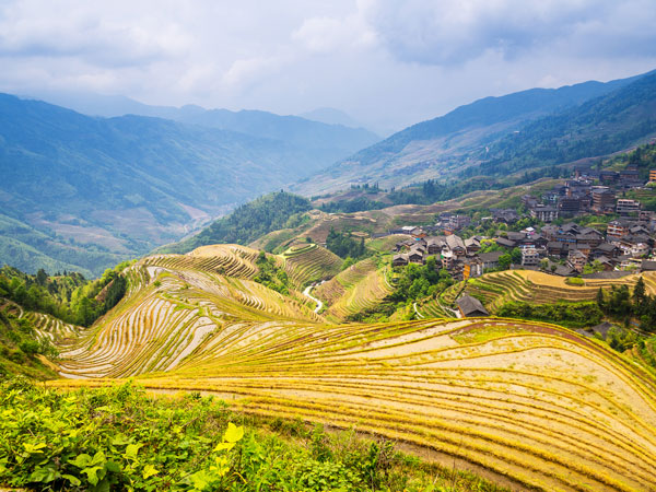 https://www.viajedechina.com/pic/city/guilin/attractions/jinkeng-rice-terraces-09.jpg