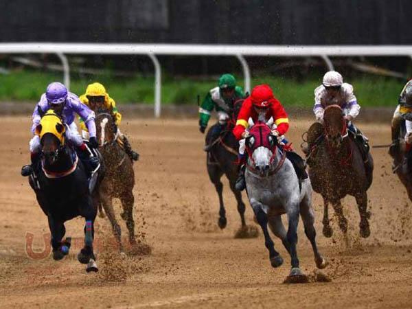 Carrera excelente de caballos