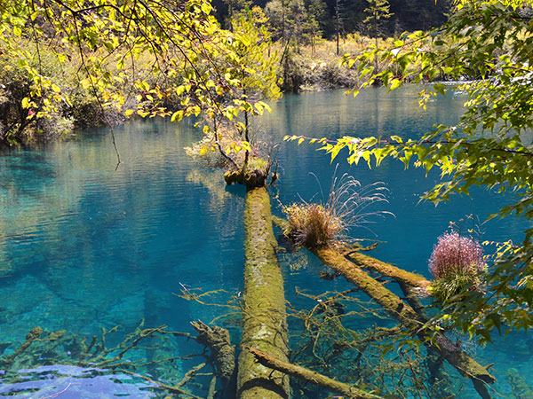 https://www.viajedechina.com/pic/city/jiuzhaigou/attractions/five-flowers-sea-in-jiuzhaigou-valley-05.jpg